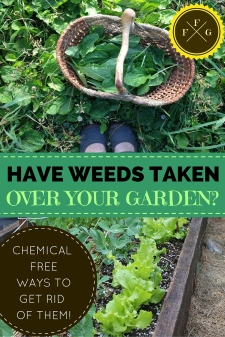 have weeds taken over your garden picture